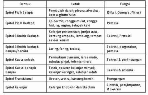 Tabel Sel Epitel